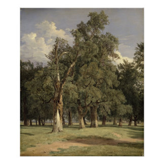 Elm trees in Prater, 1831 Poster