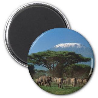 Elphants of Mt.Kilimanjaro Magnet