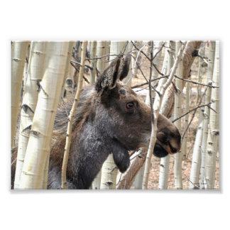Elusive Moose Photo Print