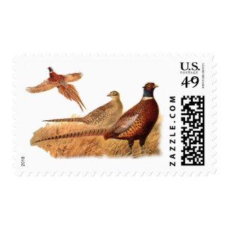 Elusive Pheasant Bird Hunting Postage