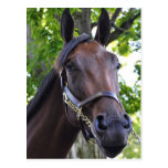 Elusive Quality Filly Postcard