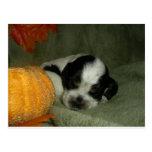 ELVIS, perrito &tan melado azul de cocker spaniel  Postal