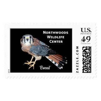 'Elwood' American Kestrel Postage