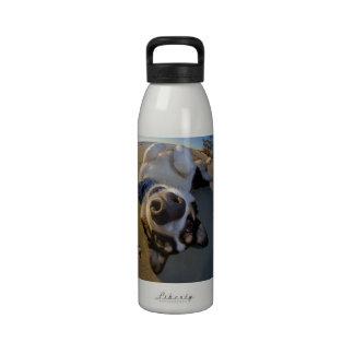 Embarrassing Moment Reusable Water Bottle