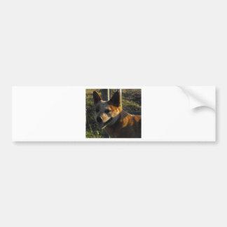 Ember Bumper Sticker