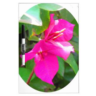 Emblema floral del bougainvillea de la flor del pizarras blancas de calidad