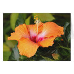 Embossed Coral Hibiscus, Above the Sea Greeting Card