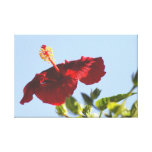 Embossed Red Hibiscus, Sunlight Flame Stretched Canvas Print