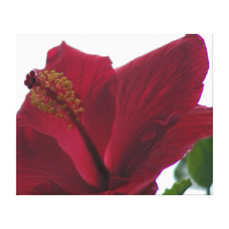 Embossed Red Hibiscus, Velvet Stretched Canvas Prints