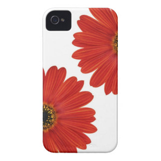 Embrace Happiness Daisies iPhone 4 Cover