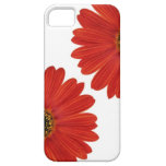 Embrace Happiness Daisies iPhone 5 Covers