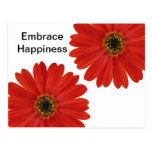 Embrace Happiness Daisies Post Card