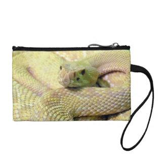 Embrague de la serpiente del albino