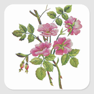 Embroidered Pink Old English Roses Square Sticker