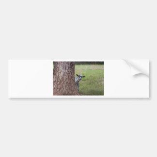 Embrome (cabra) mirar a escondidas de detrás un ár etiqueta de parachoque
