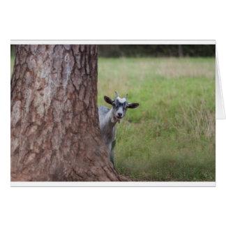 Embrome (cabra) mirar a escondidas de detrás un ár tarjeta de felicitación