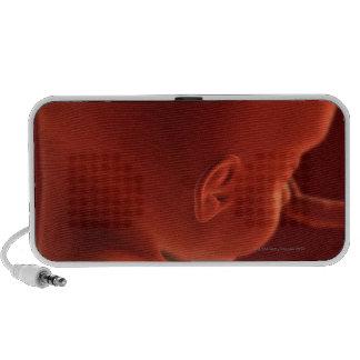 Embryonic Development 2 Speakers