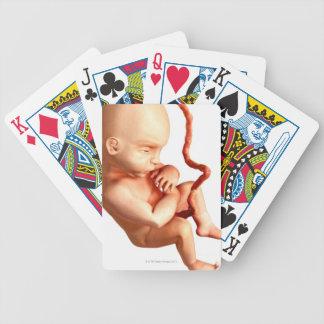 Embryonic Development Card Deck