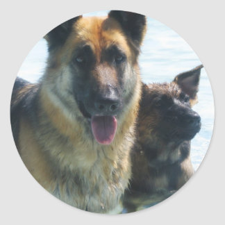 emcdogs stickers