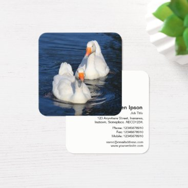 Professional Business Emden Geese Square Business Card