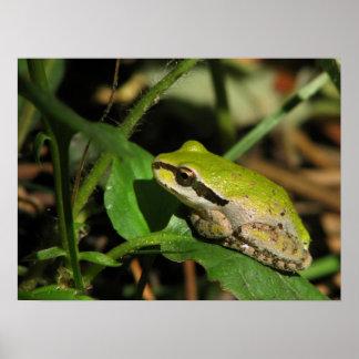 Emerald Frog Print