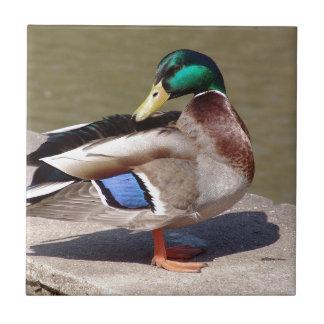 Emerald Green Headed Duck Tile