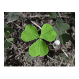 Emerald Green Irish Shamrock Photograph Postcard