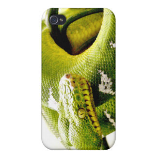 Emerald tree boa constrictor covers for iPhone 4