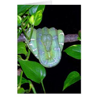 Emerald Tree Boa-Morticia Card