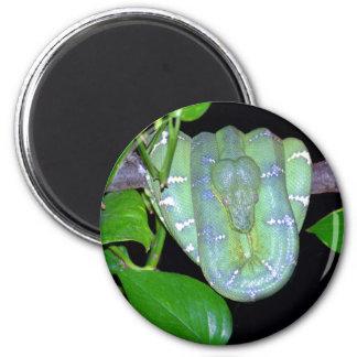 Emerald Tree Boa-Morticia Magnet