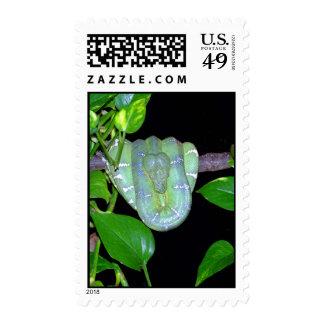 Emerald Tree Boa-Morticia Stamps