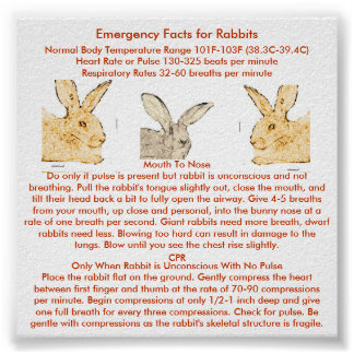 Emergency Facts for Flemish Giant Rabbits Poster
