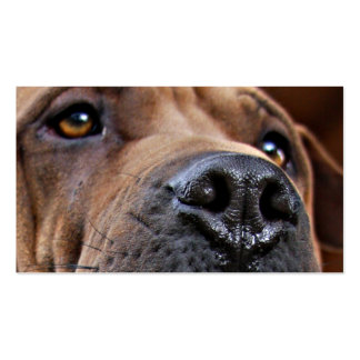 Emergency Pet Alert Cards for Pet Owners Business Card