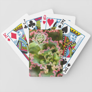 Emerging bud of an Echeveria Plant Bicycle Playing Cards