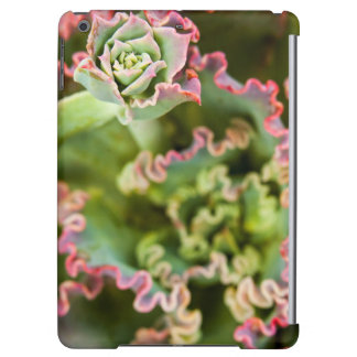Emerging bud of an Echeveria Plant iPad Air Covers