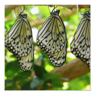 Emerging From Cocoons Invitations