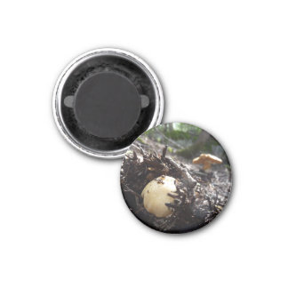 Emerging Fungi 1 Inch Round Magnet