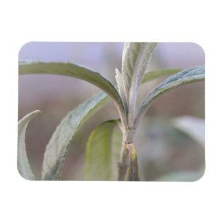 Emerging Growth - Buddleia Rectangular Photo Magnet