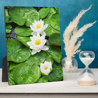 Emerging Lotus Flowers Plaque