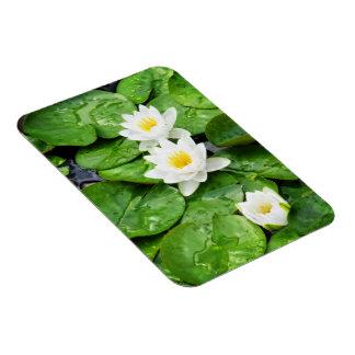 Emerging Lotus Flowers Rectangular Magnet