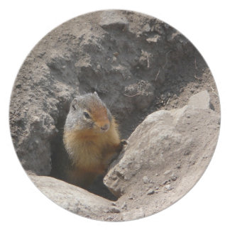 Emerging Rodent Photo Plate