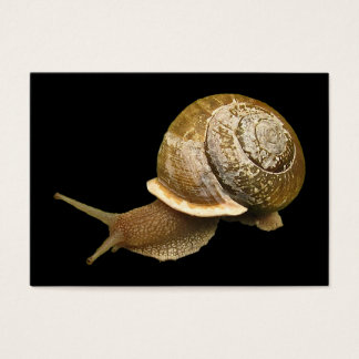 Emerging Snail ATC Business Card