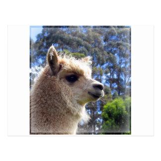 Emily Alpaca Postcard