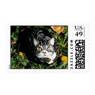 """Emily"" cat rock stamp"