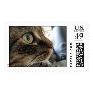 Emma Close-Up Cat Photo Large Postage Stamps