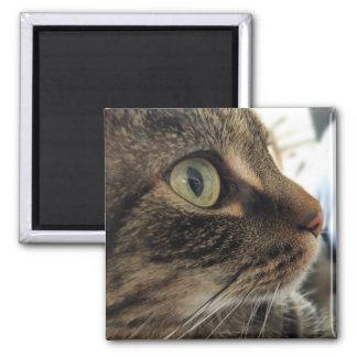 Emma Close-Up Cat Photo Square Magnet