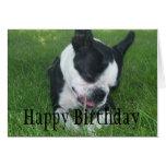 Emma la Boston Terrier que goza de un palillo Felicitación