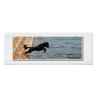 Emma, The Portuguese Water Dog Poster