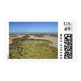 Emmagen Beach, Daintree National Park (UNESCO 4 Postage