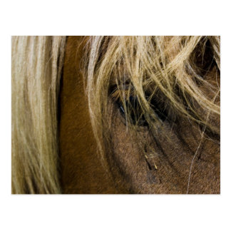 Emotional Horse Post Cards